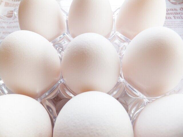 「タマゴの世界基準」が変わっている 「鶏卵汚職」で注目「アニマルウェルフェア」