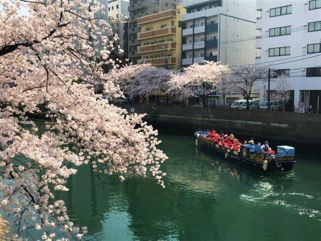 混雑を避けて船からお花見 横浜のホテル「さくらクルーズ&ステイプラン」