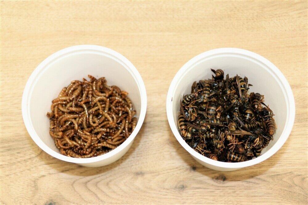 (左から)調理済みのミールワーム、ハチ