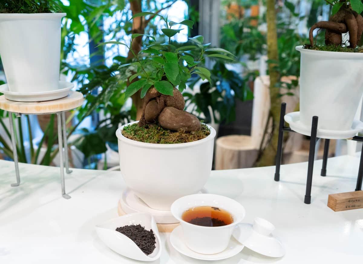 「春水堂」の茶殻を、観葉植物専門店「REN」が植物育成の腐葉土として再利用