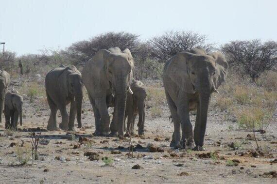象はなぜ移動を?(写真はイメージ)