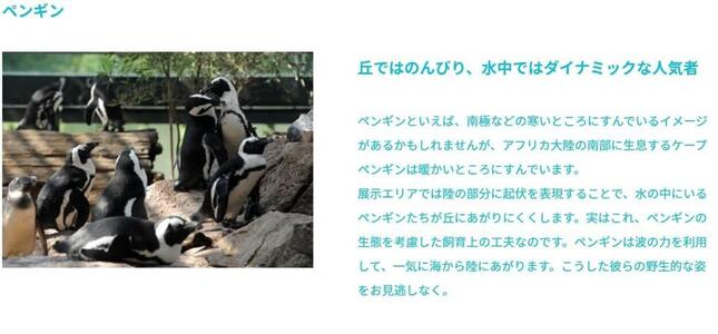 京都水族館サイトの「ペンギン」紹介ページより