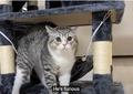 ギネス記録保持ネコ「もちまる」の底力 長嶋一茂「イヌ派の僕もかわいい」