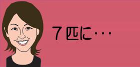 7匹に・・・