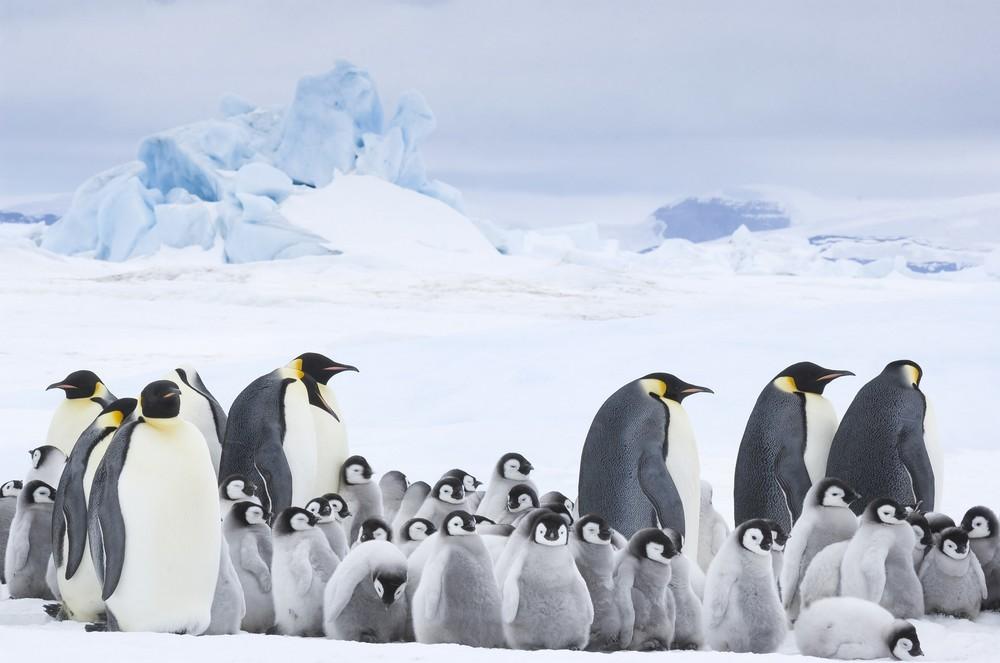 マイナス40度の大雪原を子育てをする皇帝ペンギン((C)BONNE PIOCHE CINEMA-PAPRIKA FILMS-2016-Photo:(C)Daisy Gilardini)