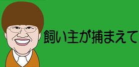 東京都杉並区に出没するミミズクの正体は? うっかりつかまえてはいけない理由