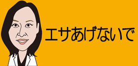 「タイワンリス」神奈川で大繁殖!可愛いけど迷惑・・・屋根飛び回り、農作物も電線もガシガシ