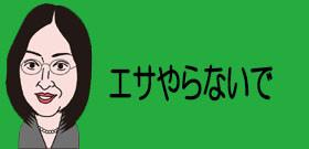 京都の観光名所「桂川」に野犬の群れ十数匹!捨てられ野生化して繁殖