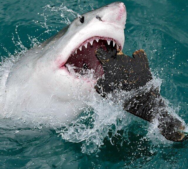 小舟の先に...サメだ! 釣り人「怖っ!」「でけーよ」